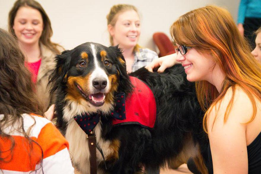 Puppy Room At Acadia University Photo Credit: David Shaffner