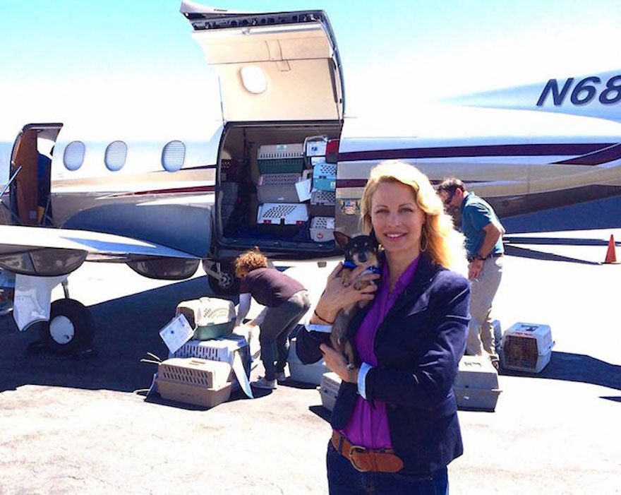 shelter-dog-airplane-transport-wings-of-rescue-yehuda-netanel-11