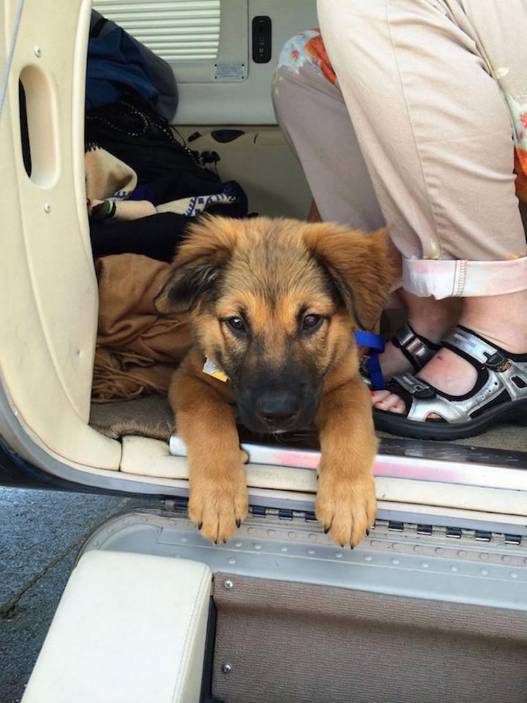shelter-dog-airplane-transport-wings-of-rescue-yehuda-netanel-12-768x1024
