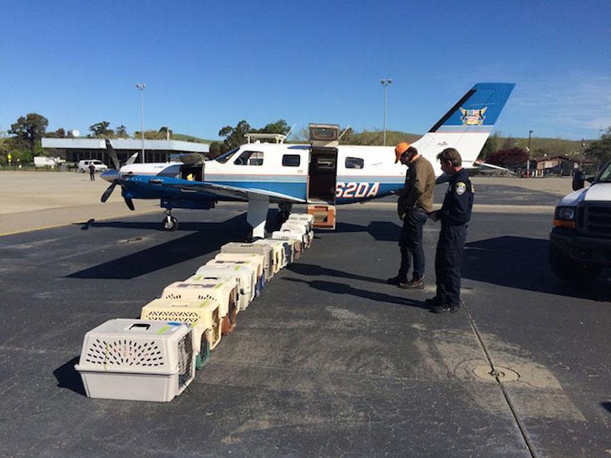 shelter-dog-airplane-transport-wings-of-rescue-yehuda-netanel-15