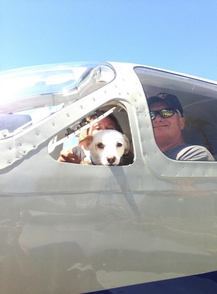 shelter-dog-airplane-transport-wings-of-rescue-yehuda-netanel-18-758x1024