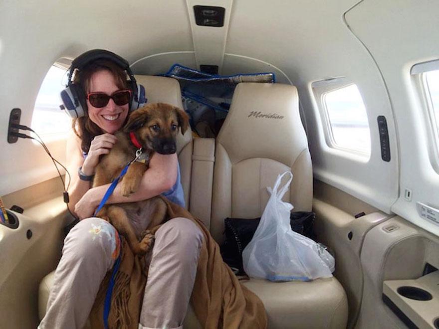 shelter-dog-airplane-transport-wings-of-rescue-yehuda-netanel-7