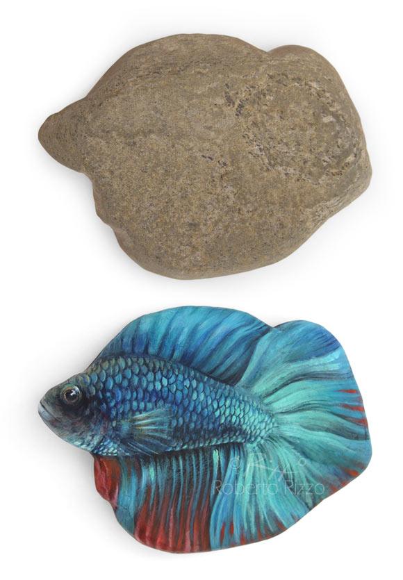 pesce-combattente