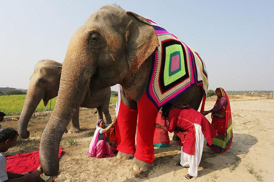 people-knit-giant-sweaters-rescue-elephants-14