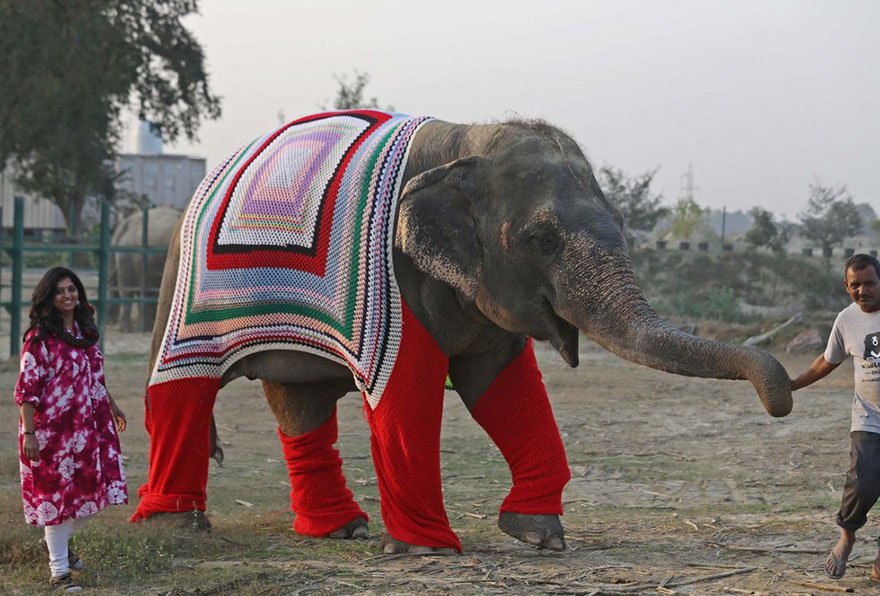 people-knit-giant-sweaters-rescue-elephants-8
